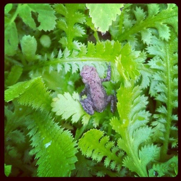 Så er haven propfyldt med mini-tudser og babyfrøer igen...