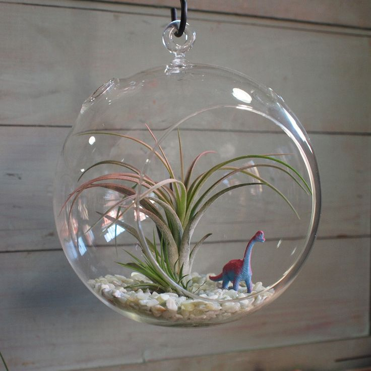 Cool Gift:  Air Plant Terrarium Kit with a little dude inside (it's alive and barely needs love).