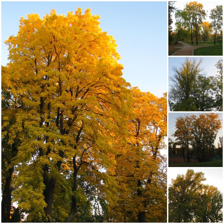 This is a yesterday view of park Luzanky in front of our apartment Living Showroom www.livingshowroom.cz . Let's find a wonderful autumn in Brno!