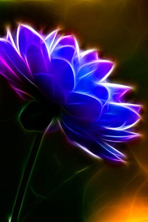"Photo Art -  Photography - Flowwe Photography - Dandelion Blue - 8x10"" Fine Art Print - Flower Photography - Home Decor - Macro - Surreal on Etsy, $22.00"