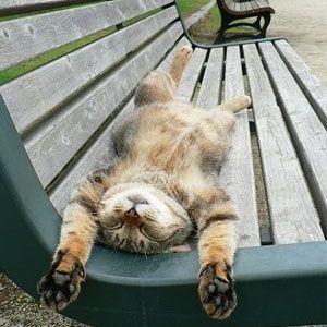 http://www.adelgazarysalud.com/consejos-de-salud/causas-del-cansancio-excesivo #cansancio #dormir #gatos