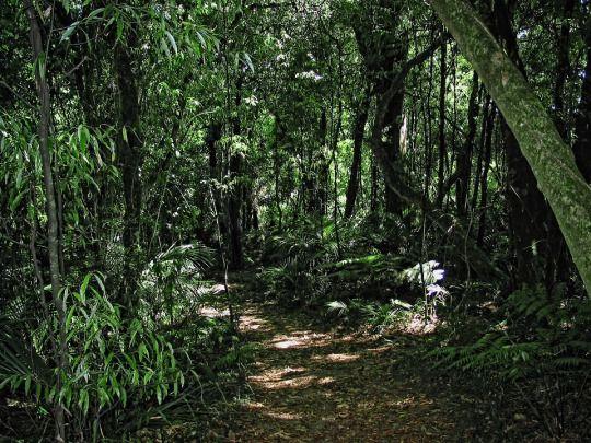 Trail through the bush, dappled in summer sunlight. This was the Manawatu Gorge track February 2003