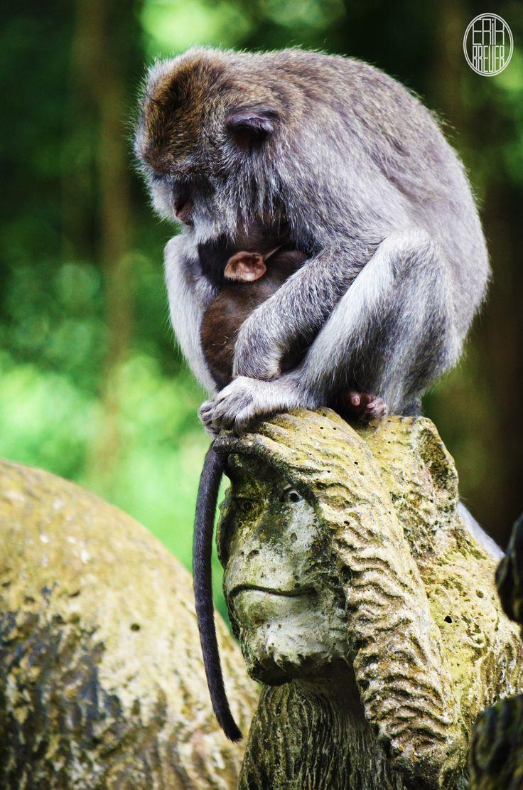Two monkeys sitting on a monkey statue - Animals