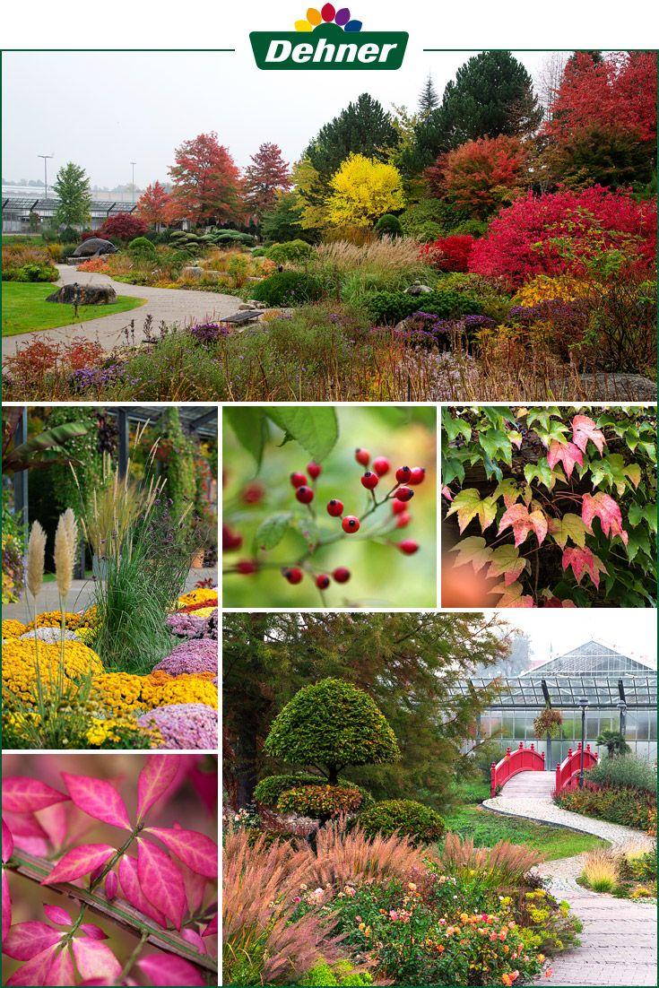 Herbstspaziergang Im Dehner Blumenpark Pflanzen Stauden Balkon Pflanzen