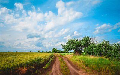 Scarica sfondi campo, oblast, kirovohrad oblast, alberi, strada, ucraina, kirovograd