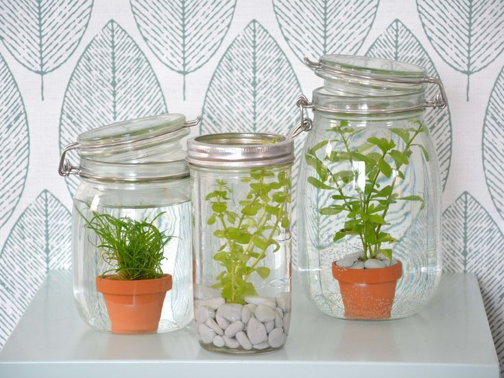 les 25 meilleures id es de la cat gorie plantes aquatiques int rieur sur pinterest plantes. Black Bedroom Furniture Sets. Home Design Ideas