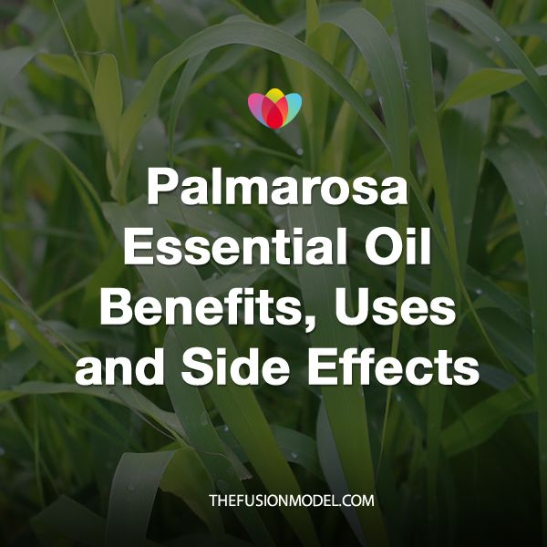 Palmarosa essential oil is extracted fromCymbopogon martinii,a species of grassthat is indigenous to India. Due to its rose-like aroma (similar to rose geranium essential oil), this oil is a common ingredient insoaps, perfumes, and other cosmetic products. However, don't be fooled by its delicate floral scent, which belies itsfever, infectious disease, rheumatism and nerve-related pain …