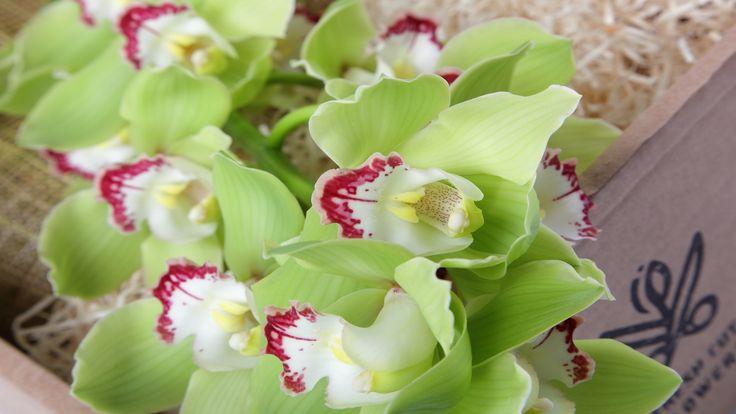 Орхидеи в подарочной коробке. Зеленые орхидеи. Цветы и подарки. Коробки с живыми цветами. Онлайн заказ. Доставка цветов и подарков.