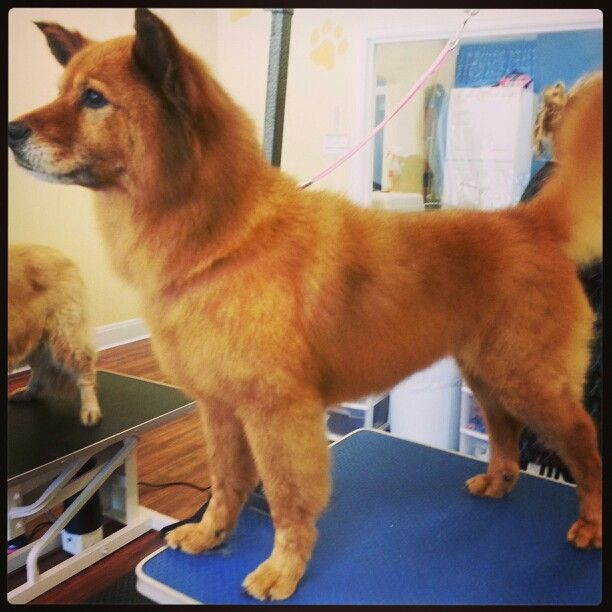 Dog Grooming Harrison Ohio