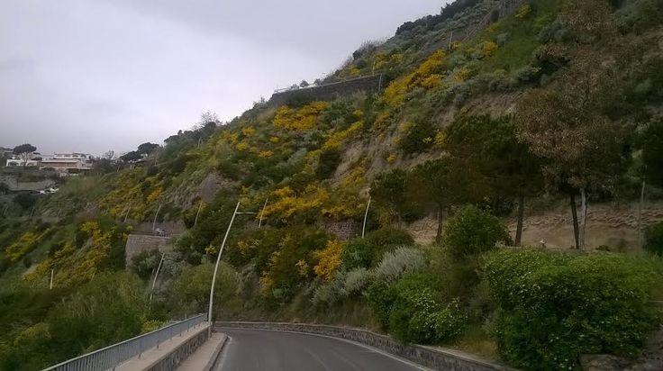 Vediamo se siete preparati...  Dove conduce questa strada?  #ischia #iloveischia #viraccontolitalia