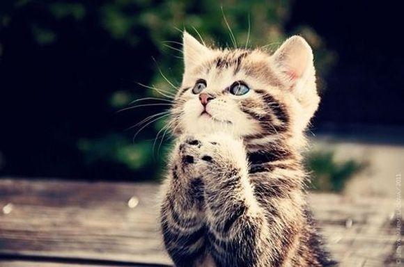 Kitty prays