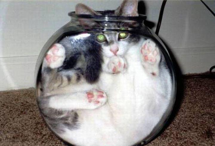 Top 10 des chats pris dans des positions bizarres - Quand le chat refuse d'être un animal normal