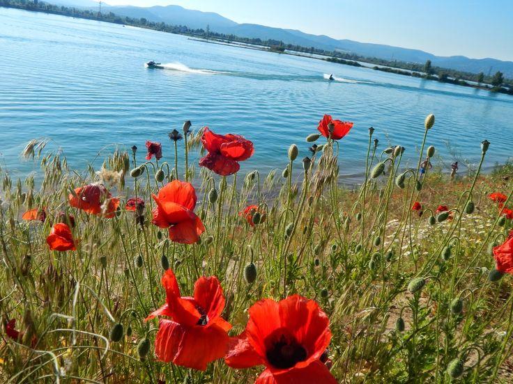 Kirándulóutak Magyarországon : A budakalászi Lupa-tó