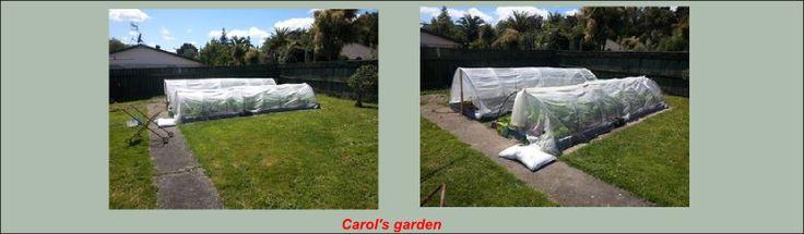 Carol's garden1
