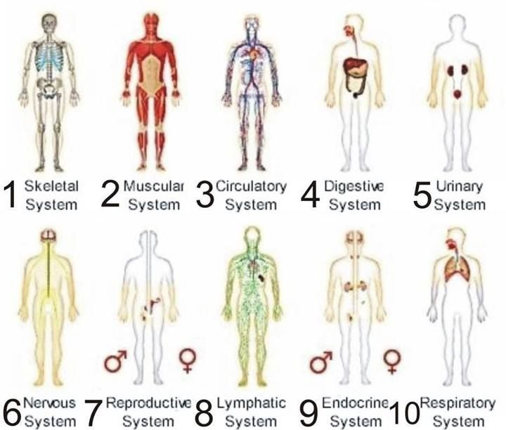 the human body is essential to 2004-02-12 the science of sleep  we have to sleep because it is essential to maintaining normal levels of cognitive skills such as  human body & mind |.