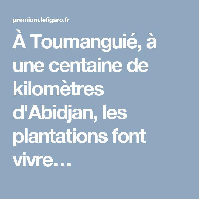 À Toumanguié, à une centaine de kilomètres d'Abidjan, les plantations font vivre…