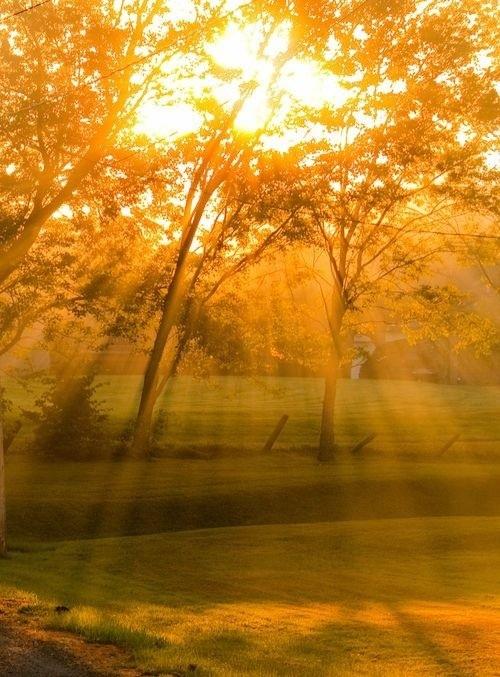 autumn.  #nature