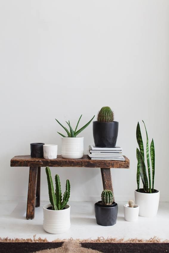 Every home needs a little green in it! We love clustering succulents in pretty ceramic pots.