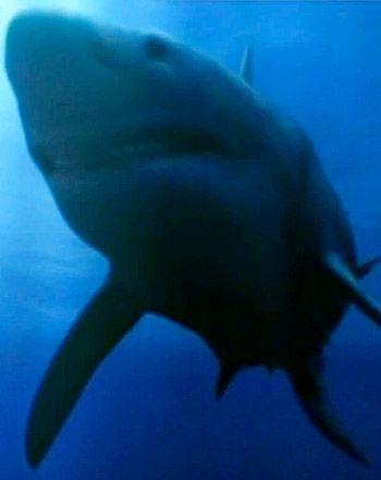 #Shark_Week: Discovery Channel