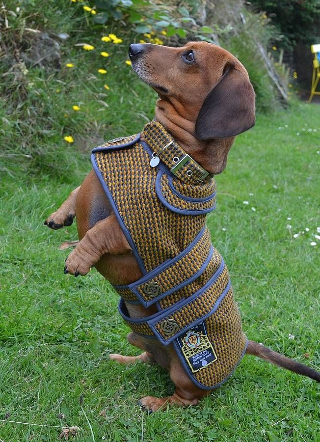 Beautiful tailored dog coats using some of the world's rarest tweeds and tartans which are hand-woven in the Isle of Man $151.42