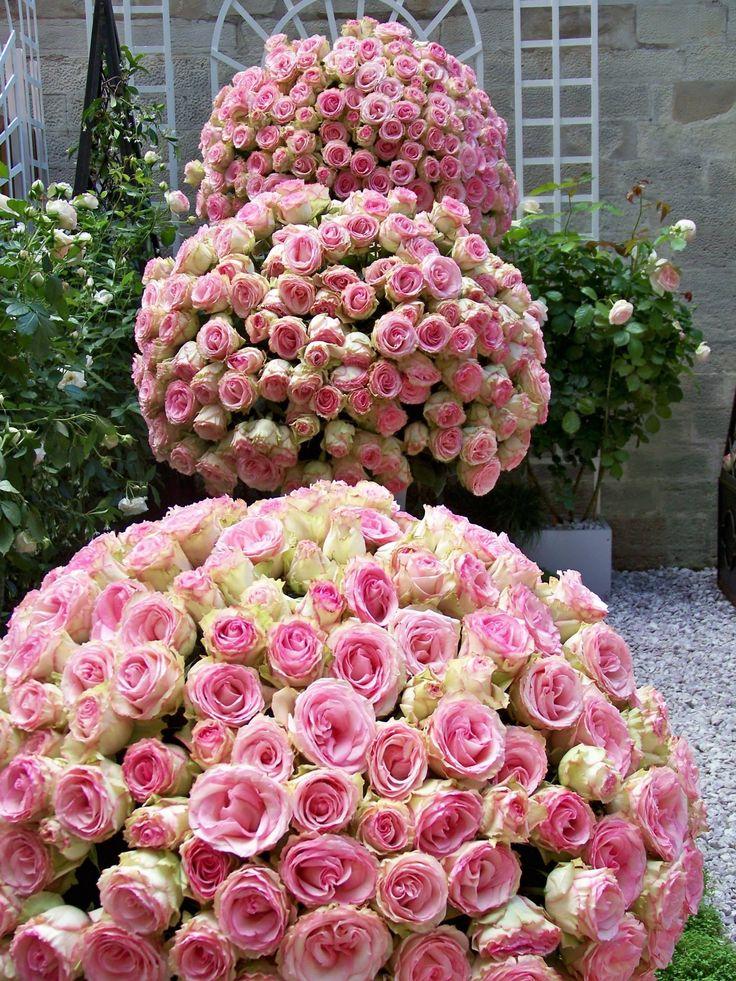 Цветов оптом, букеты чайных роз фото красивые огромные