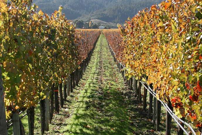Wine Country (Northern California)