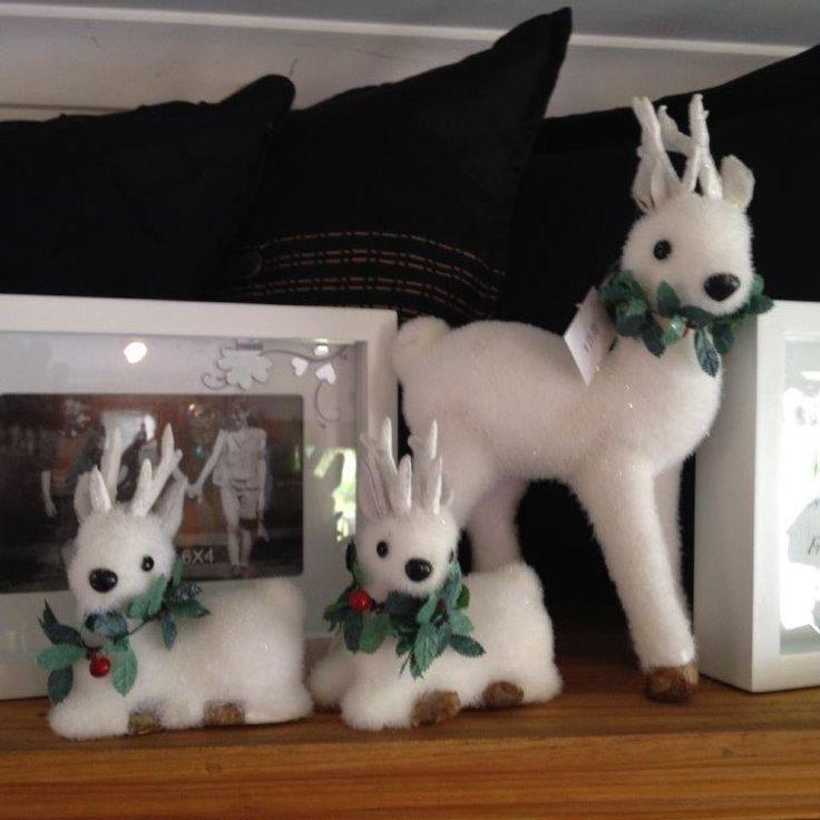 Cute white reindeer with a glisten all their own