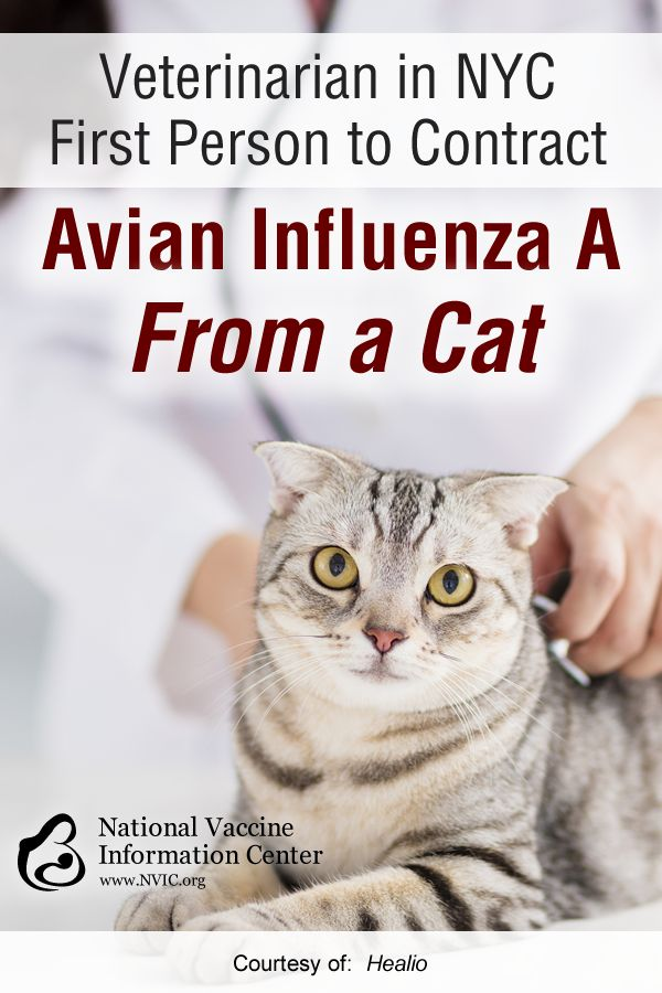 A veterinarian in New York City was the first person in the United States to contract an avian influenza A virus from a cat, late in 2016.