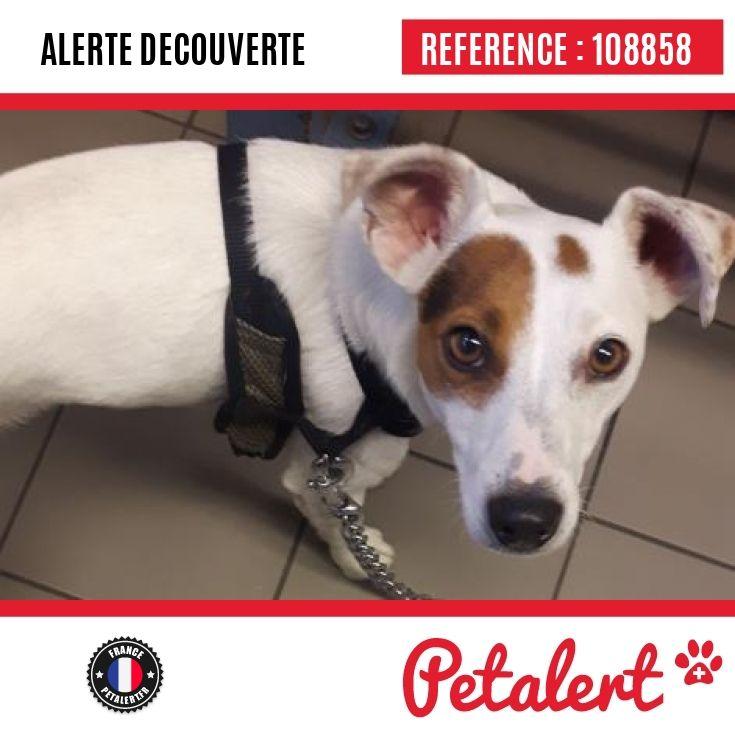 Cette Alerte est désormais close : elle n'est donc plus visible sur la plate-forme www.petalert.fr.  L'émetteur de cette Alerte ne s'est plus manifesté, malgré nos relances. Merci pour votre aide.