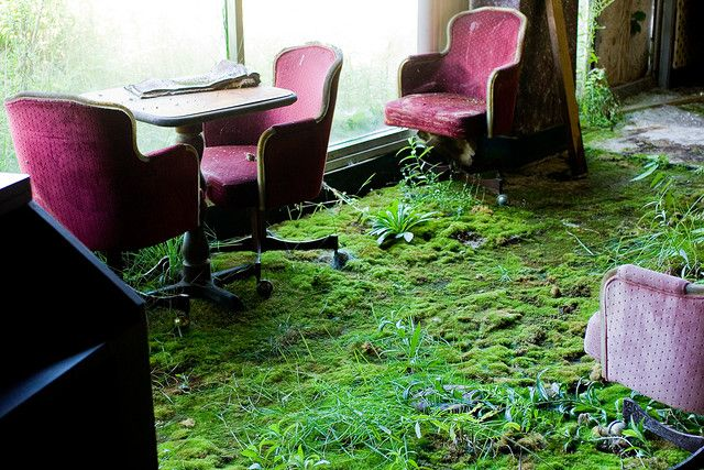 Real grass & moss carpet at the abandoned Belmont Inn in Youngstown, Ohio.