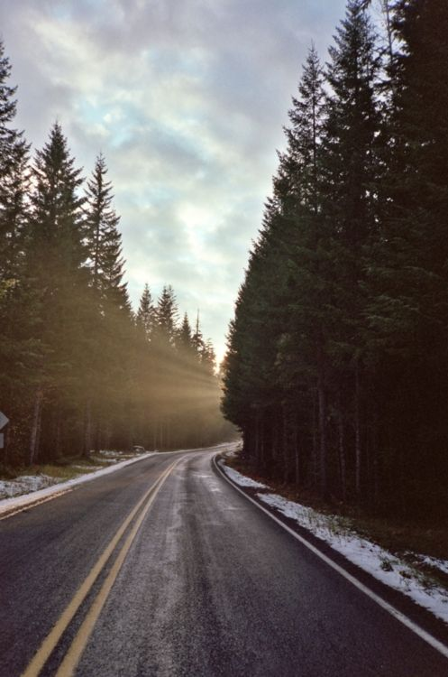.: Long Roads, The Roads, Country Roads, Open Roads, Trees, Roads Trips, Pacific Northwest, Travel Quotes, Wind Roads