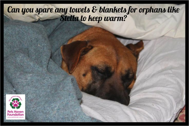 We love to make sure that our orphans are snug and warm. We are in desperate need of bedding so that orphans like Stella can keep warm and comfortable. If you have any spare bedding please think of us! You can drop it at one of our many drop off points across Melbourne listed on our website www.petshaven.org.au or feel free to drop them at the shelter and get some furry cuddles while you're at it! #petshavenfoundation #firstoptionisadoption #petshaven #adopt #rescue #donationdrive…
