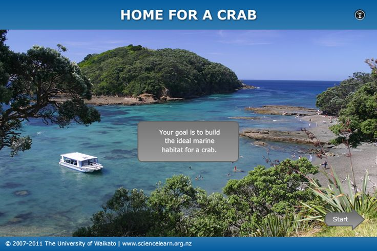An interactive activity in which students construct the ideal habitat for crab larvae to resettle.