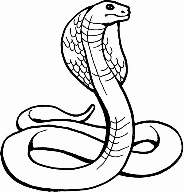 King Cobra Coloring Page Elegant King Cobra Drawing Clipart Best