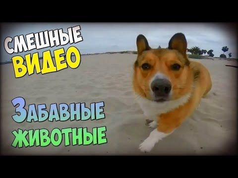 Смешные видео приколы с собаками #1 2016