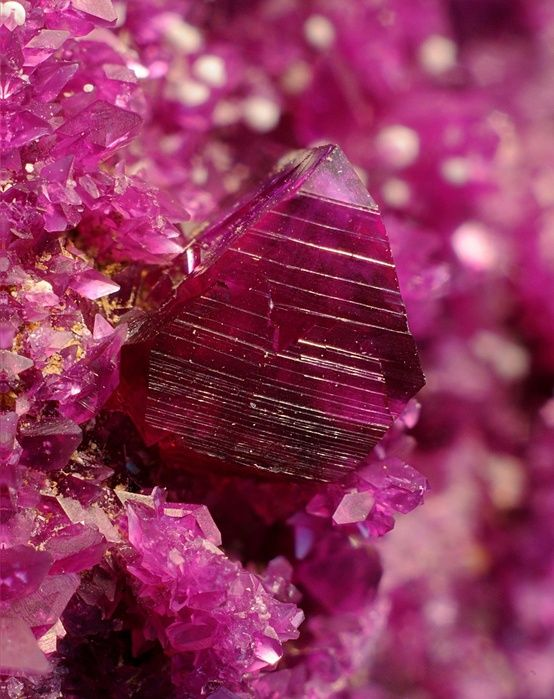 Magenta. The color that tricks the eyes. http://www.sofiadumaine.com