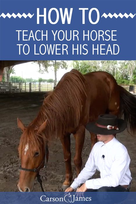 Here's a good horse training tip that will show you how to teach your horse to lower his head. This really comes in handy for things like washing, bridling, doctoring, and anything else that  involves working with a horse's head.