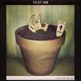 DIY Halloween zombie decorations  1) fake hand (get at Halloween store or Walmart during the scary season)  2) flower pot  3) soil   4) make your own tag!