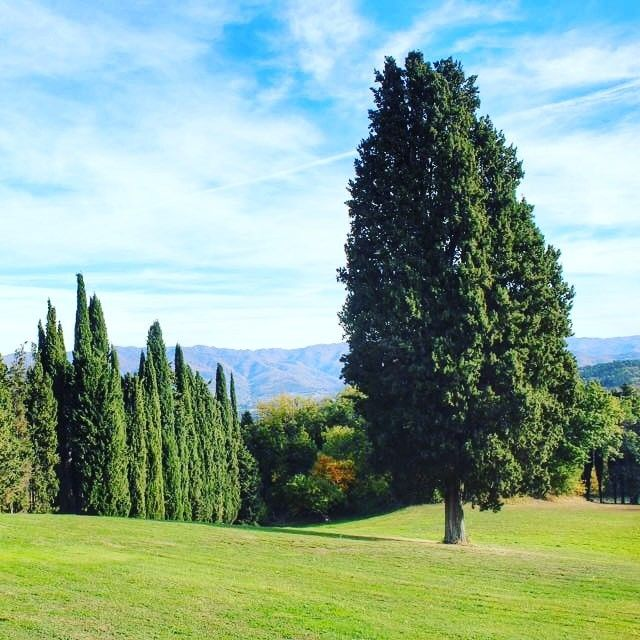 Looking for a magical place in Tuscany?   #villacampestri #oliveoilresort #experience #oliveoil #mugello #tuscany  #instatravel #travelmemories #lifeofexploring #travelgram #travelstories #travelgo #wanderlust #mytravelgram #lifeintravel #comeandsee #travelinspired
