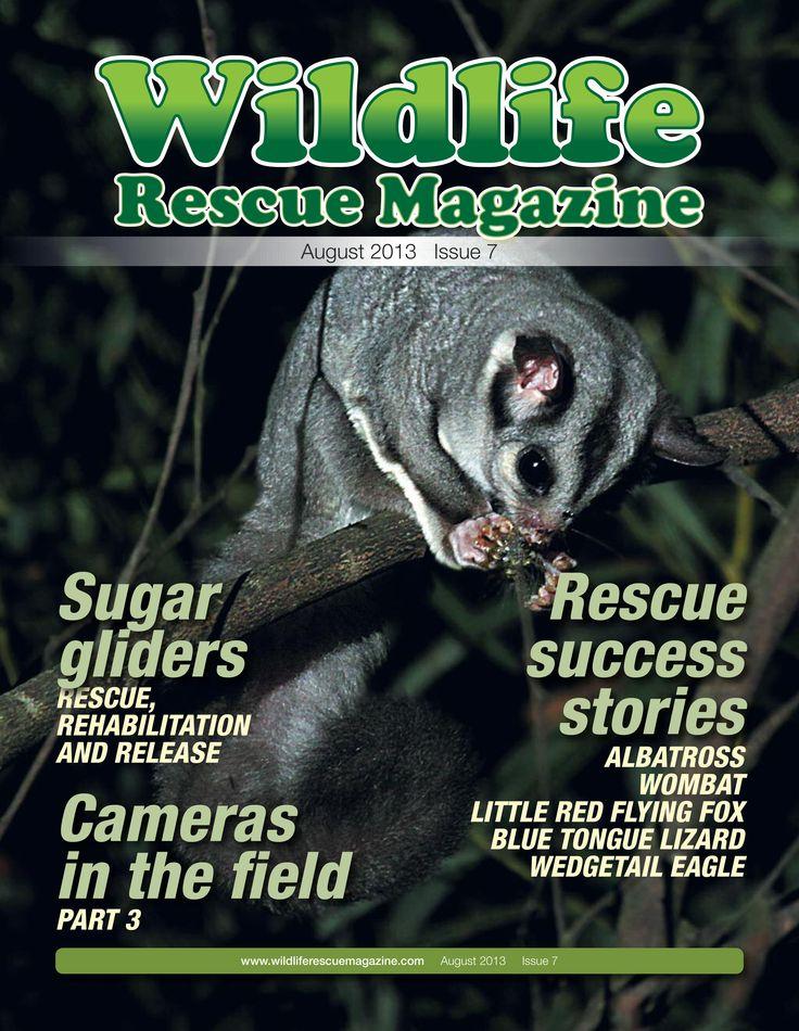 Issue 7 Wildlife Rescue Magazine. #flying fox, #bats, #sugar_glider, #albatross, #wombat, #blue_tongue_lizard, #wedgetail_eagle  http://wildliferescuemagazine.com/issue-seven.html