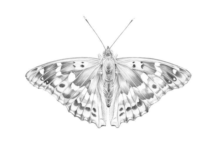 HABIBA — Butterflies by Habiba Doorenbos...
