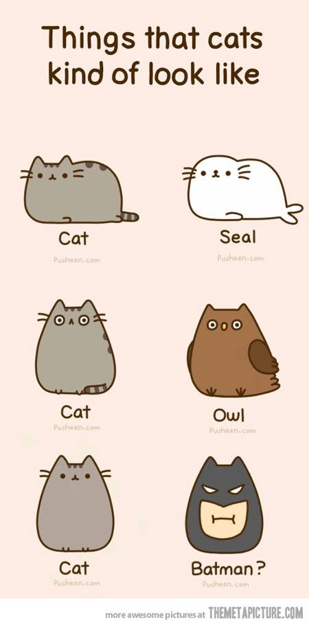 talkative cat breeds