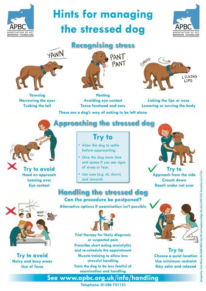 When I first adopted my dog, I misread many of her stress cues and made our first month together tougher than needed. The infographic below is great for reading signs of stress in your dog and gives some useful tips on how to manage their stress. I wish I had this when I first got my Lemon! We hope this is useful for you and your pup - for more dog advice, go to the Tips N' Tricks section of the Finding Rover app!