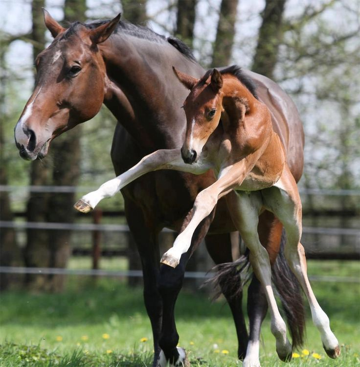 heheh so cute! mama horse and baby !