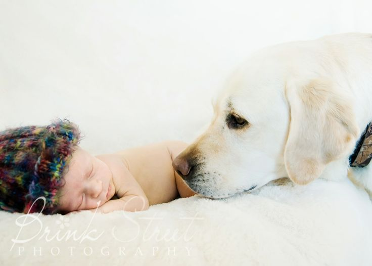 Newborn and dog: Newborns Photographers, Cute Baby, Adorable Pet, Baby Pics, Cute Ideas, Newborns Pics, Baby Pictures, Newborns And Dogs, Dogs Baby