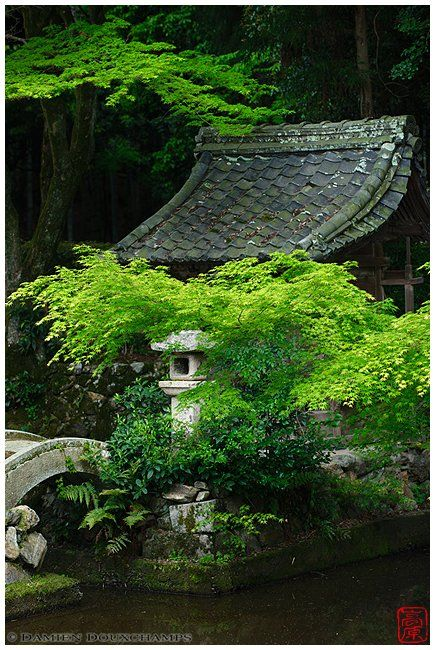 Spring leaves hiding a small sanctuary in Hitokoto temple Kyoto, Japan 日本 by Damien Douxchamps