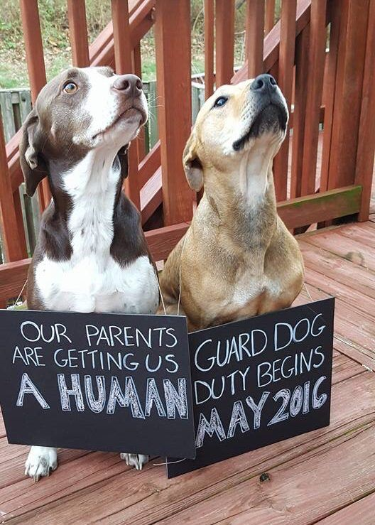 25 Pregnancy & Sibling Announcement Ideas