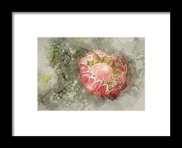 Protea National Flower framed Print available