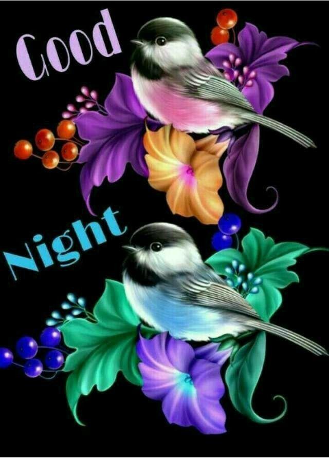 Видео открытку спокойной ночи с птицами, открытка среднего формата