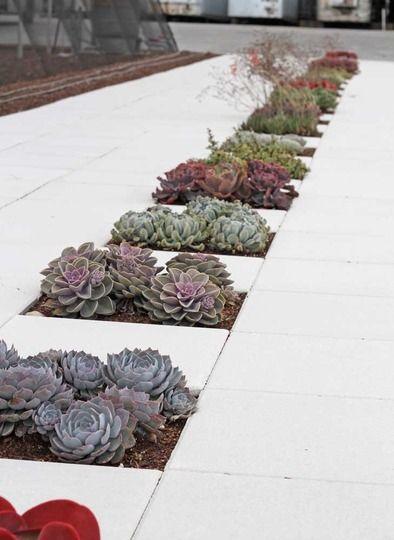 succulent void paving